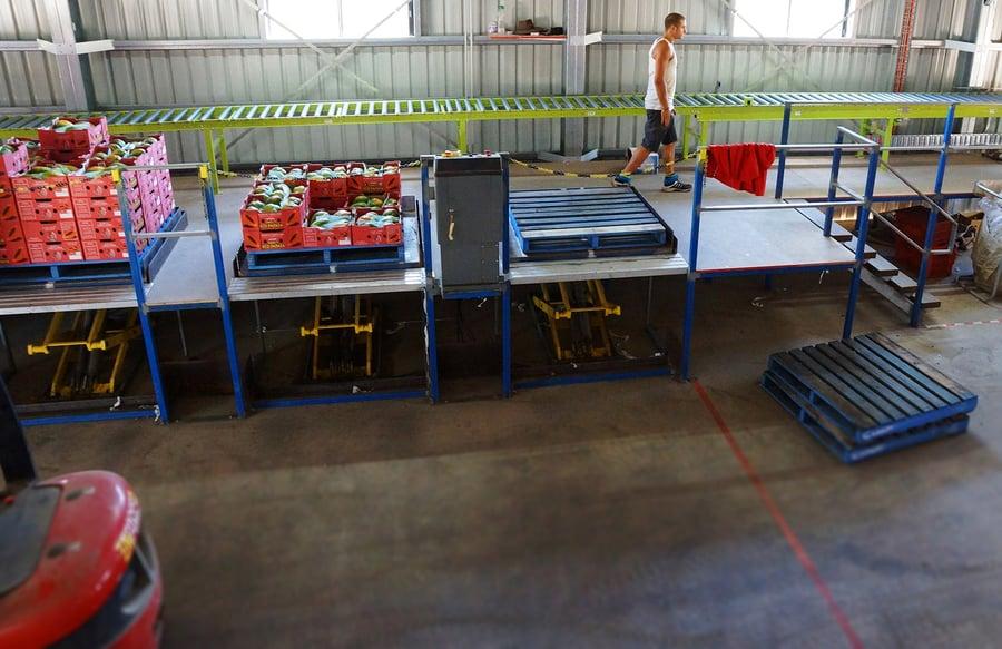 Dyno Conveyors_Fruit_Belt Conveyor System_Payapa_Australia_NZ_Tranzbelt (7).jpg