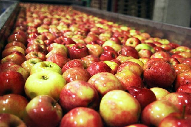 applew.jpg